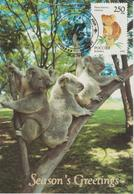 Russie Carte Maximum 1993 Animaux Koala 6041 - 1992-.... Fédération