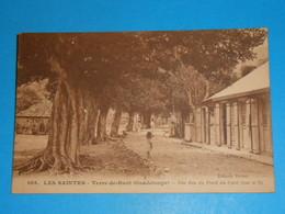 Guadeloupe ) Les Saintes N° 105 - Vue N° 2 - Terre De Haut - Une Rue Du Font Du Curé  : EDIT : Boisel - Guadeloupe