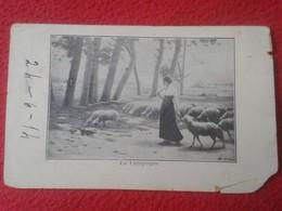 POSTAL POST CARD CARTE POSTALE MUJER CHICA PASTORA PASTORCILLA CON OVEJAS. OVEJA . DE FRANCE ? SPAIN ? SHEEP SHEPHERD VE - Animales
