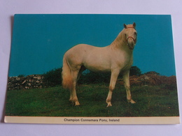 Chevaux Champion Connemara Pony Ireland - Pferde