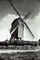 MEULEBEKE-BOSTERHOUTMOLEN-MOULIN A VENT-MOLEN - Meulebeke