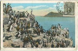 Peru - Isla Palominos (Aves Guaneras) - Verlag Luis Sablich Callao - Peru