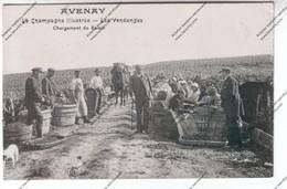 TRES RARE CPA AVENAY (51) : La Champagne Illustrée - Les Vendanges : Chargement Du Raisin (panier, Hotte) - Vignes