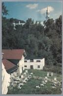 CA.- ABBAYE CISTERCIENNE DE N.-D. DU LAC. LA TRAPPE. P.Q. CANADA. Le Monastère Vu Du Rucher - Quebec