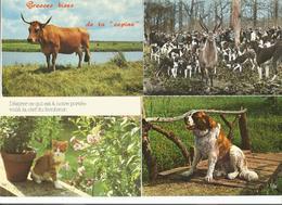 LOT   23 CARTES  CPM  ANIMAUX - 5 - 99 Postales