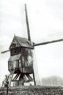 BAZEL-WAAS-HANEWIJKMOLEN-MOULIN A VENT-molen - Kruibeke