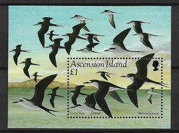 "ASCENSION ISLANDS 1994 SEA BIRDS ""Sterna Fuscata"" - Palmípedos Marinos"