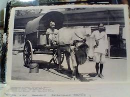 INDIA CALCUTTA ANIMATA MUCCA VACCA COW AGRICULTURAL CHART CAR N1940 GX5808 - India