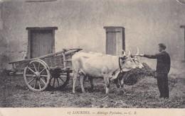LOURDES. ATTELAGE PYRENNEN. C.B. CH CHAMBON.  TAUREAUS BULLS CIRCA 1900s NON CIRCULEE- BLEUP - Lourdes