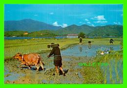 HONG KONG, CHINE - THE CHINESE FARMERS VERY BUSY DURING SPRING AND AUTUMN SEASONS - - Chine (Hong Kong)