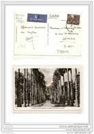 4036 AK /PC/ CARTE PHOTO/N°766/CEYLON/AVENUE OF PALMS/BOTANIC GARDENS/PERADENYA - Sri Lanka (Ceylon)