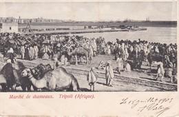 TRIPOLI AFRIQUE, MARCE DE CHAMEAUX - Libya