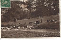SUISSE GRISONS  Animaux - Aus Dem Engadin - Ziegenherde  Chevre - Theme Chevres - Goat - Goats - Circulé Le 13.12.1916 - GR Grisons