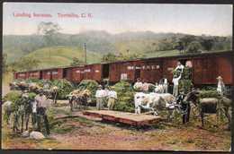 Costa Rica Turrialba Workers Loading Bananas On Railroad Old Postcard - Costa Rica
