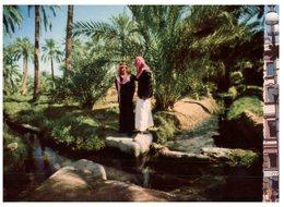 (ORL 260) Saudi Arabia - Alhasa Oasis - Saudi Arabia