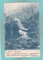 Old Post Card Of Stockentobelweg,Elefantenbach,Zurich,Switzerland,R73. - ZH Zurich