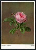 B9662 - Rosa Rosen - Wiechmann Bildkarte - Künstlerkarte - Künstlerkarten