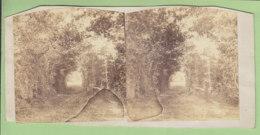 MARCHENOIR Vers 1860 - 1870 : La Forêt. Photo Stéréoscopique. 2 Scans. - Stereoscopic