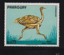 Paraguay, Bird, Nandu, MNH - Paraguay