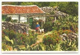 ESPAGNE A TYPICAL SCENE CANARY ISLANDS - Espagne