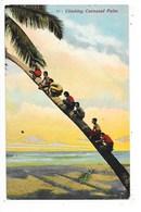 SRI LANKA  (ceylon)  Climbing Cocoanut Palm   -  L 1 - Sri Lanka (Ceylon)