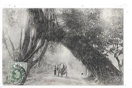 SRI LANKA  (ceylon)  Kalutara  -  L 1 - Sri Lanka (Ceylon)