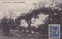 FLYING FOXES AT HIHIFO, TONGATABU. BAT MURCIELAGO-STAMP TONGA 1/2d VAEUA OE PENI OBLITERE CIRCA 1900s. UNIQUE-TBE- BLEUP - Tonga