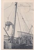 SYRIA. HOMS. SBARCO DI CAVALLI PER LE TRUPPE. HORSE CHEVAL SHIP BATEAU. CIRCULEE CREMONIA A TERAME 1915-RARISIME- BLEUP - Syrië