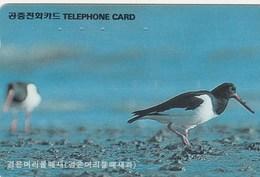 Korea South -  Bird - Corée Du Sud