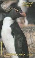 Falklands Is. - Rockhopper Penguin - 1CWFA - Falkland Islands