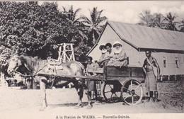 A LA STATION DE WAIMA. NOUVELLE GUINEE. CIRCA 1900s ETHNIC VINTAGE CHEVAL HORSE PAYSAGE LANDSCAPE. TBE- BLEUP - Papoea-Nieuw-Guinea