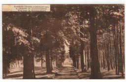Averbode  Weg Naar De Kroningskapel - Scherpenheuvel-Zichem