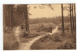 Rijmenam  Sous-bois - Bonheiden