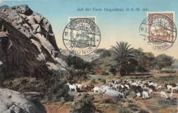 Namibie / Belle Oblitération - 01 - Auf Der Farm Heigamkap - Namibie