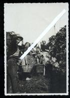COSTUMI - LA VENDEMMIA - UVA - VINI - FOTOCARTOLINA ORIGINALE ANNI 30-40 FORMATO GRANDE - Vigne