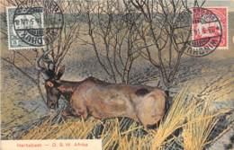 Namibie / Belle Oblitération - 15 - Hartebest - Namibie
