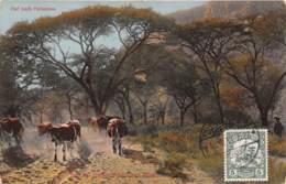 Namibie / Belle Oblitération - 50 - Pad Nach Hatsamas - Namibie