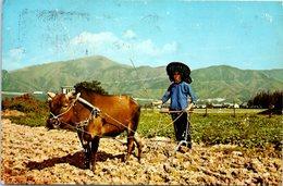 ORIENT - Attelage - Agriculture - Traditional Farming In The Orient (Oblitération Kong Don )(pli En Haut Gauche) - Attelages