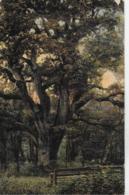 AK 0085  Friederiken-Eiche Im Hasbruch ( Oldenburger Land ) Um 1908 - Bäume