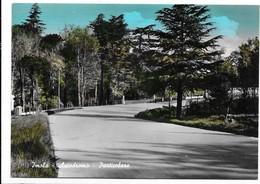 Imola (Bologna). Autodromo. Stampa Al Retro. Moto Club Santerno. - Imola