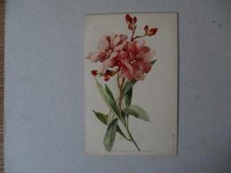 FLEURS ROSES RAPHAEL TUCK & FILS SERIE 1  N° 8 - Blumen