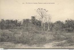 CPA Coloniale AOF - Un Coin De Brousse , Vautours Posés Sur Un Baobab - Circulée 1922 - Sénégal