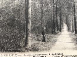 Auderghem-Oudergem/-Drève D'Auderghem Forêt-animée - Auderghem - Oudergem