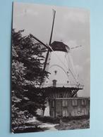 """WILLEMSTAD, D'Orangemolen ( Café """" ONS GENOEGEN """" - C. M. A. Van Sprundel ) Anno 1973 ( Zie Foto ) Jos Pe ! - Pays-Bas"""
