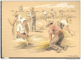 CPSM Edition Barré Et Dayez - Illustrateur Bonnefoy - Croquis Régionaux : Botteleurs - 1300K - Illustrators & Photographers
