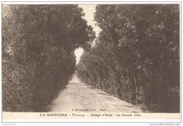 CPA La Manouba - Collège D'Hulst - La Grande Allée - Non Circulée - Tunisia