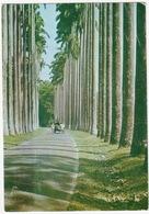 Peradeniya - Botanic Gardens - Sri Lanka - Sri Lanka (Ceylon)