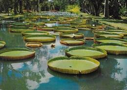 MAURITIUS - GIARDINO BOTANICO - VIAGGIATA 1983 FRANCOBOLLO ASPORTATO - Mauritius