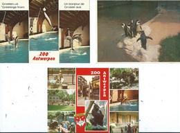 Antwerpen Zoo Anvers ( 3 Kaarten ) - Antwerpen