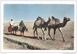 CPA Coloniale - Scènes Et Types - Chameaux Dans Le Sud - Circulée - Afrique